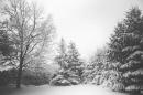 snow-landscape-trees-winter